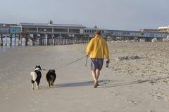 Человек с 2 собаками стоковое фото rf