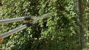 Человек уравновешивая дерево с ножницами сада акции видеоматериалы