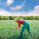 Человек фермера работая в саде лука с сапкой Стоковая Фотография