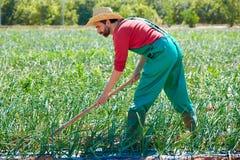 Человек фермера работая в саде лука с сапкой Стоковое фото RF