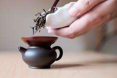 Человек чая Стоковое Изображение RF