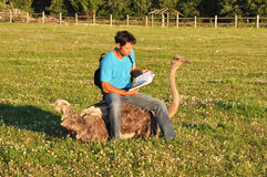 Человек читая книгу сидя на страусе стоковые изображения rf