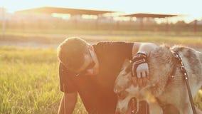 Человек штрихуя лайку собаки на заходе солнца акции видеоматериалы
