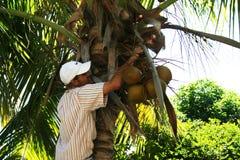 Человек Cocconuts стоковое изображение rf