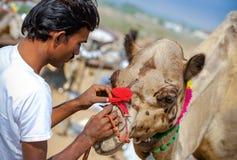 Человек Rajasthani индийский украшает его верблюда на ярмарке Pushkar, Индии Стоковое Изображение