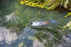 Человек snorkeling в пруде Стоковая Фотография RF