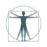 Человек Vitruvian силуэта шаржа вектор Стоковое Изображение