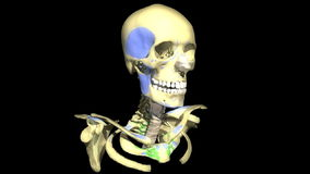 Человеческая голова, медицинская предпосылка бесплатная иллюстрация