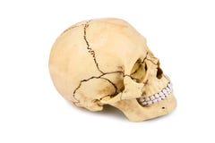 Человеческая голова черепа изолированная на белизне Стоковое фото RF