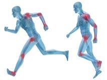 человеческая изолированная анатомия боли человека 3D Стоковые Фото