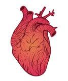 Человеческая линия искусство сердца также вектор иллюстрации притяжки corel Тип татуировки Стоковая Фотография RF