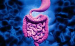 человеческая пищеварительная система иллюстрация штока