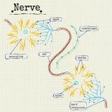 Человеческая структура нерва Стоковые Фотографии RF