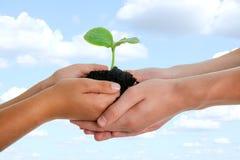 Человеческие руки держа молодой завод с почвой, красивым небом в backg Стоковое Изображение
