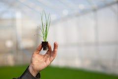 Человеческие руки держа молодой завод с почвой над запачканной предпосылкой природы Саженец CSR дня мировой окружающей среды экол Стоковое Фото