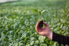 Человеческие руки держа молодой завод с почвой над запачканной предпосылкой природы Саженец CSR дня мировой окружающей среды экол Стоковая Фотография RF