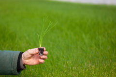 Человеческие руки держа молодой завод с почвой над запачканной предпосылкой природы Саженец CSR дня мировой окружающей среды экол Стоковые Изображения