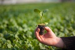 Человеческие руки держа молодой завод с почвой над запачканной предпосылкой природы Саженец CSR дня мировой окружающей среды экол Стоковая Фотография