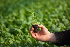 Человеческие руки держа молодой завод с почвой над запачканной предпосылкой природы Саженец CSR дня мировой окружающей среды экол Стоковые Фотографии RF