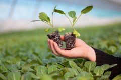 Человеческие руки держа молодой завод с почвой над запачканной предпосылкой природы Саженец CSR дня мировой окружающей среды экол Стоковое фото RF