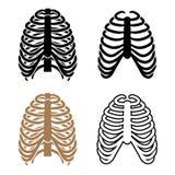 Человеческие символы грудной клетки Стоковое фото RF
