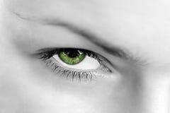 Человеческий глаз Стоковое Фото
