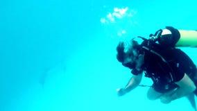 Человеческий играть с дельфинами видеоматериал