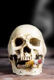 Человеческий курить черепа Стоковые Изображения