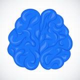 Человеческий мозг вектора Стоковые Изображения RF