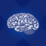 Человеческий мозг Взгляд со стороны вектора Стоковое Изображение RF