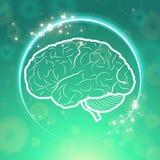 Человеческий мозг в круге Стоковая Фотография
