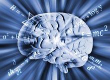 Человеческий мозг с уровнениями математики Стоковая Фотография