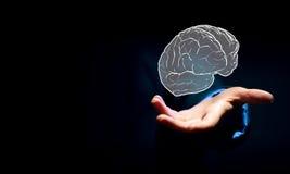 Человеческий мозг Стоковая Фотография