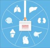 Человеческий орган для комплекта значка трансплантата Трансплантация концепции органов Стоковая Фотография