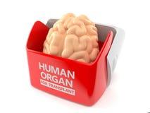 Человеческий орган для концепции трансплантата иллюстрация штока