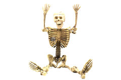 Человеческий скелет на белой предпосылке Стоковые Изображения RF