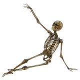 Человеческий скелет иллюстрация вектора