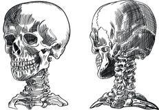 Человеческий череп, вектор Стоковое Фото