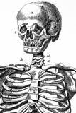 Человеческий череп, винтажная иллюстрация Стоковые Изображения RF