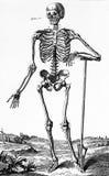 Человеческий череп, винтажная иллюстрация Стоковое Изображение