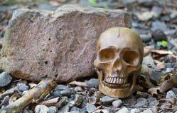 Человеческий череп остается Стоковое Фото