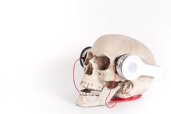 Человеческий череп слушает к музыке шлемофоном/наушниками изолированными на whi Стоковое Изображение RF
