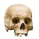 Человеческий череп установленный против белой предпосылки Стоковое Фото