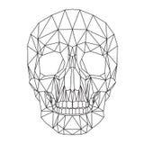 Человеческий череп, череп, голова, графики полигона Стоковые Изображения