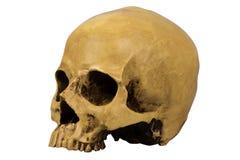 Человеческий череп Стоковое Изображение