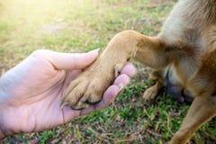 Человеческое владение руки нога собаки стоковое изображение rf