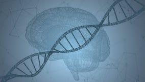 Человеческое дна, мозг Абстрактная предпосылка с плексом Анимация петли бесплатная иллюстрация