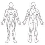 Человеческое тело muscles силуэт Стоковая Фотография RF