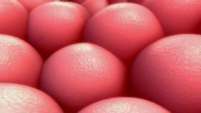 Человеческое microbiota бесплатная иллюстрация