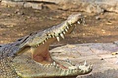 Челюсти крокодилов стоковое изображение
